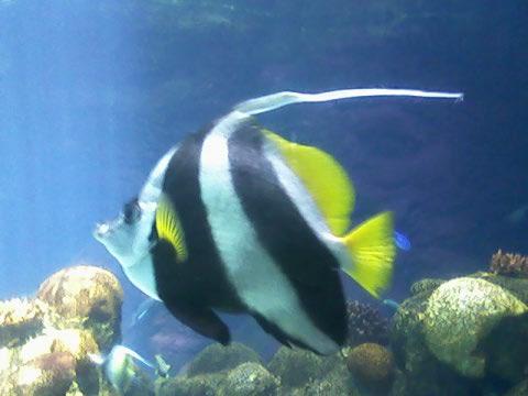 fish 2 at minn zoo jun09