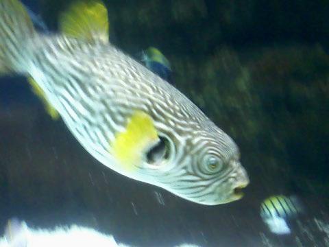 fish at minn zoo jun09