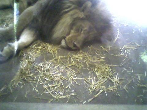 lion como park jun09
