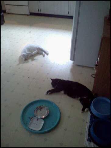 summer kitchen floor