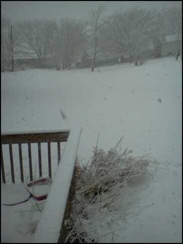 snowfall feb 2014