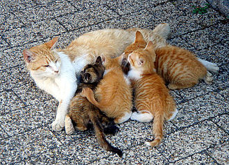 cat with kittens
